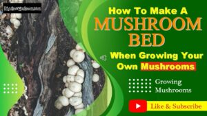 How to Grow Mushroom