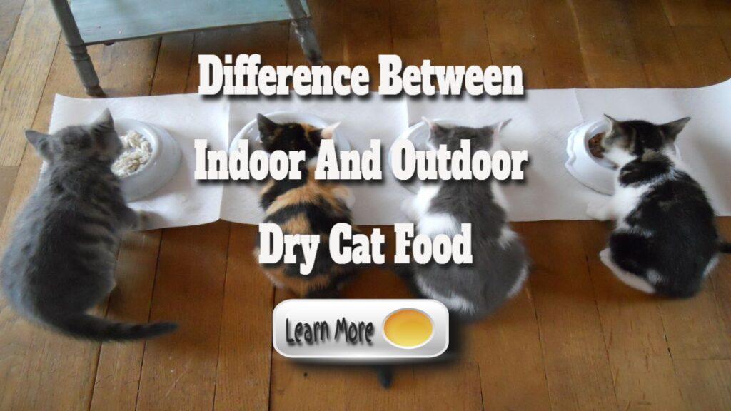 indoor and outdoor cats